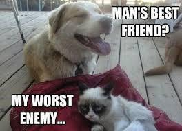 21 Of The Best Grumpy - grumpy cat lovers mega compilation 21 pics