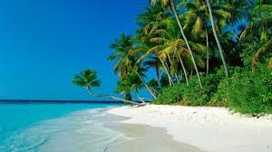The Beach House Cape Tribulation by Cape Tribulation Tour Tropic Wings Tours U0026 Charters