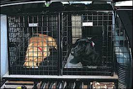 Truck Bed Dog Kennel Dog Vault Pet Carrier K 9 Cage