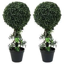 topiary trees charles bentley pair of 2ft boxwood buxus topiary trees