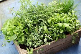Indoor Fragrant Plants - the herb gardener the 10 best fragrant herbs for your garden