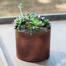 the best indoor plants house plants shop easy care house plants at jackson and perkins