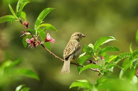 gray small bird on green leaves free stock photo
