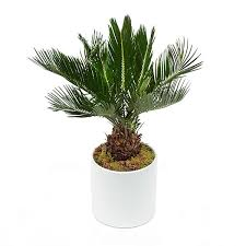 small indoor plants plant delivery nyc plantshed