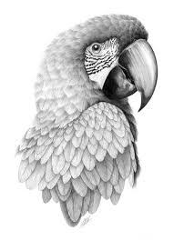 best 25 parrot drawing ideas on pinterest cute animal drawings