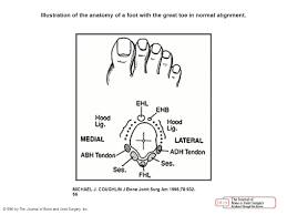 Anatomy Of A Foot Instructional Course Lectures The American Academy Of Orthopaedic