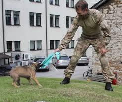 belgian shepherd us army belgian shepherd puppy makes history as first k9 to join estonian
