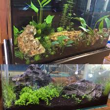 Aquascape Chicago Learn How To Aquascape Your Fish Tank