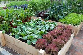 organic vegetable garden the best way to lead a healthy lifestyle