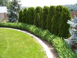 fence landscaping fence line landscaping ide 50870 evantbyrne info