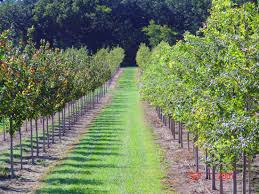 nodaway valley tree farm home page
