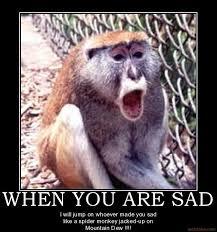 Sad Spider Meme - sad monkey meme