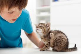 flea prevention and treatment for your kitten or cat