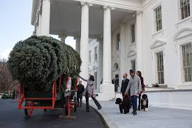 the 2014 white house tree arrives
