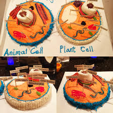 plant cell and animal cell model cake u0026 candy fun stuff