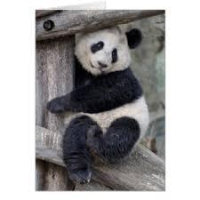 panda birthday gifts on zazzle