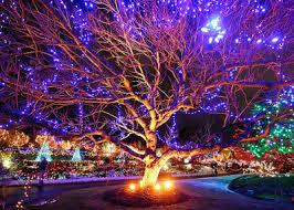 vancouver christmas light maze vancouver christmas market light van dusen xmas pinterest