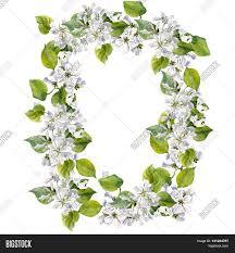 round floral frame watercolor apple image u0026 photo bigstock