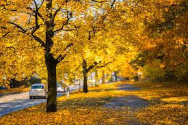 golden cars free images nature path outdoor branch light sun road