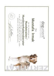 Tierheim Bad Segeberg Qualifikation Positive Dog Academy
