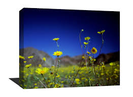 a stunning museum quality canvas gallery wrap flowers blue a stunning museum quality canvas gallery wrap flowers blue yellow death valley