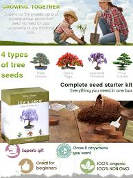 amazon com nature u0027s blossom bonsai tree seed starter kit grow