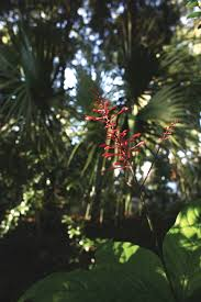 florida native plant transforming a sandy landscape to a nature habitat u2013 jody wood