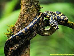 a green snake wallpapers awesome and dangerous snakes wallpapers of 2013 for android and