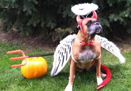 Boxer Dog Halloween Costume Adorable Halloween Costumes Furry Buddies Pet