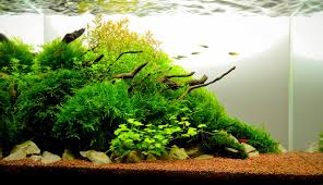 Aquascape Design Layout Planted Tank Drops Of Light In The Forest By Petruc Dan Iulian