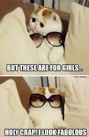 Cute Cat Memes - best 25 cat memes ideas on pinterest funny cat memes cute cat