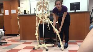 Anatomy And Physiology Skeletal System Test Anatomy And Physiology Skeletal System Youtube