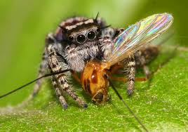 study spiders eat 400 800 million tons of insects and other prey