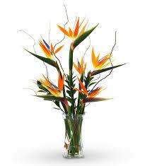 barnstable florist barnstable ma flower delivery avas flowers shop