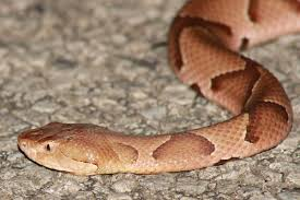 snake removal all things wild nuisance wildlife control