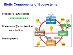 goals of this course understand ecosystem structure and function