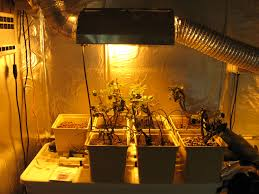 what are the main types of grow lights beginner u0027s guide