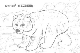 realistic animal coloring pages wild animals coloring pages 5 wild animals kids printables