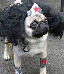 Halloween Costumes 28 Pug Halloween Costumes Images Animals Pug