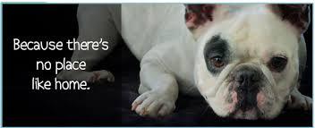 pet euthanasia in home pet euthanasia in california