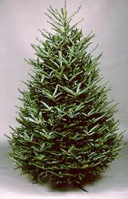 How Much Are Real Christmas Trees - pre order real christmas trees online