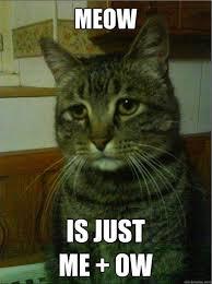 Sad Cat Meme - best of the depressed cat meme smosh