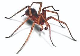 hobo spiders how to get rid of aggressive house spiders