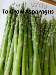 the best way to grow asparagus emily u0027s frugal tips