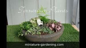 terrarium plants youtube