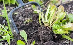 the beginner u0027s guide to starting a veg garden the telegraph