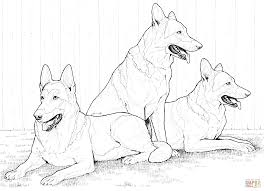german shepherd coloring page german shepherd dogs coloring page