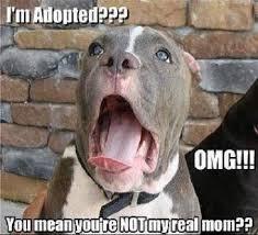 adoption meme mean real memes comics pinterest adoption