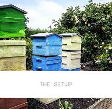 backyard beekeeping for extra cash u2013 bottlestore com blog