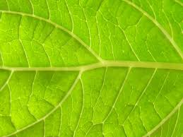 free leaf images pictures and royalty free stock photos